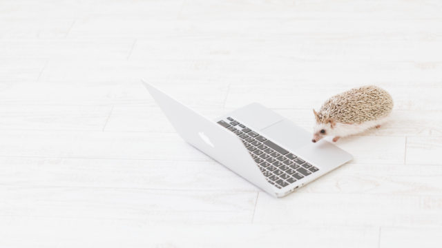PCやるハリネズミ